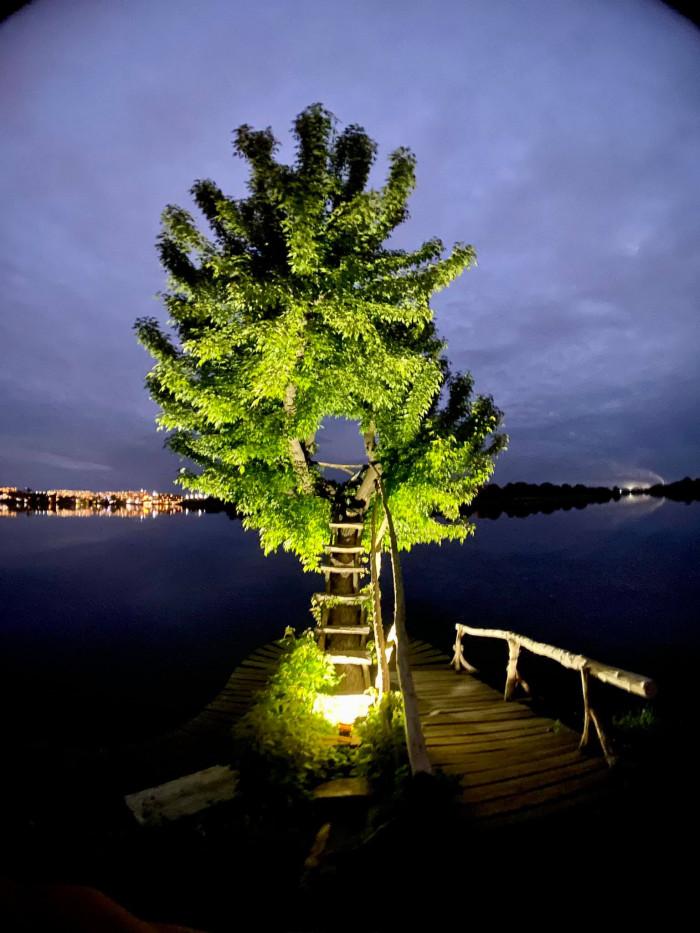 Дерево на Оствиці