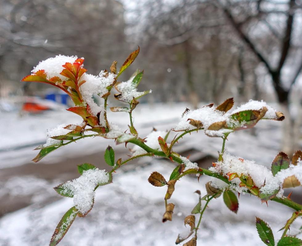 «Білий сніг на зеленому листі...» 22 березня